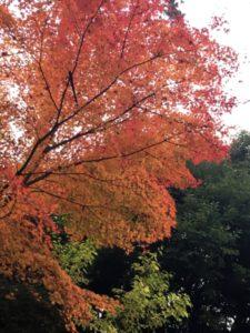 笠山荒神の紅葉