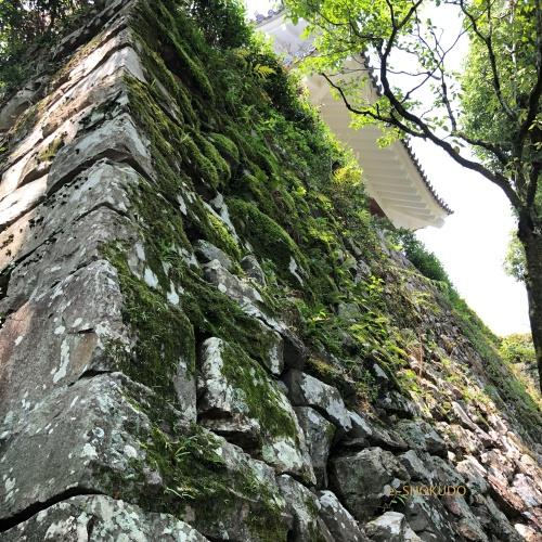 犬山城 石垣